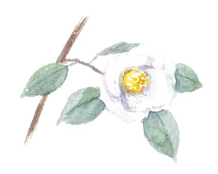 Drawing with transparent watercolors White Shusuke (Wibisake)