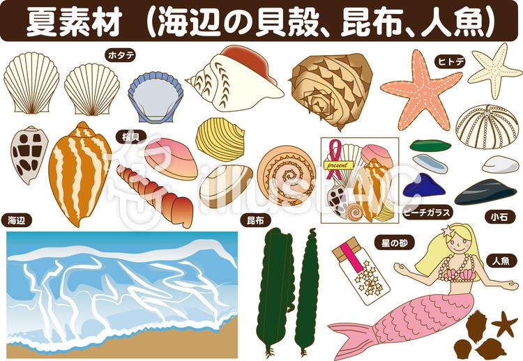 貝殻、人魚など(夏素材)のイラスト