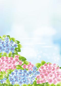 Aozora & hydrangea 41