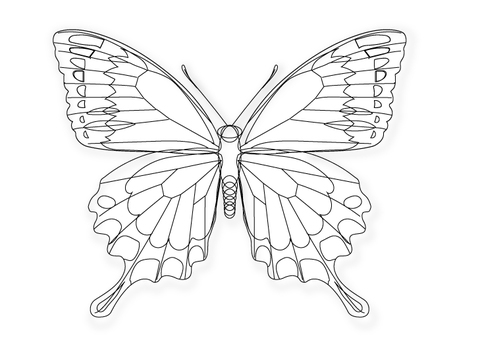 Underpainted swallowtail butterfly line drawing for tattoo