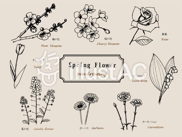 春の花 ペン画イラスト No 992659無料イラストならイラストac
