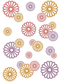 Chrysanthemum (white border)