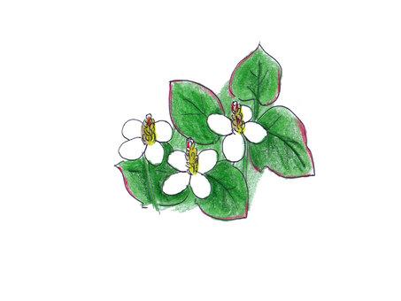 Dokdami flowers