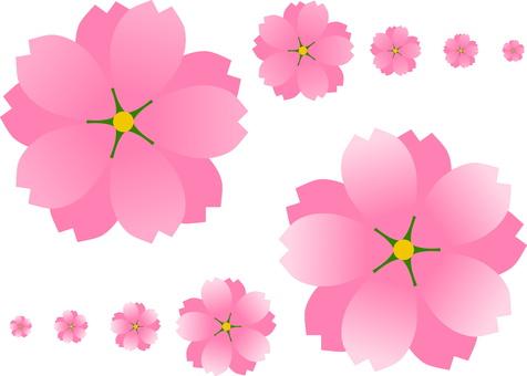 벚꽃 004 번 이중