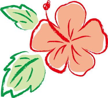 Hibiscus 03 - color