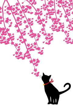 Spring · Sakura · cherry blossoms and cats