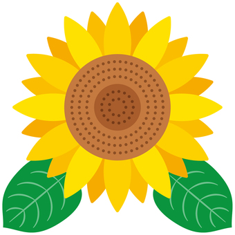 Sunflower -01