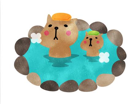Capybara hot spring parent and child cute