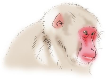 Watercolor style monkey