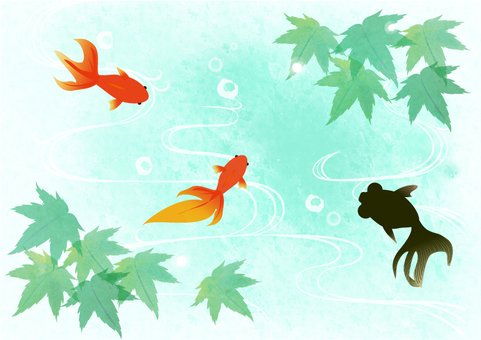 Maple and goldfish