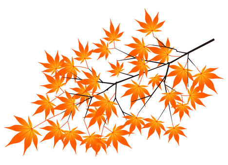 Maple leaves (autumn leaves · red)