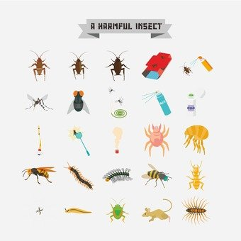 Pest insect illustration