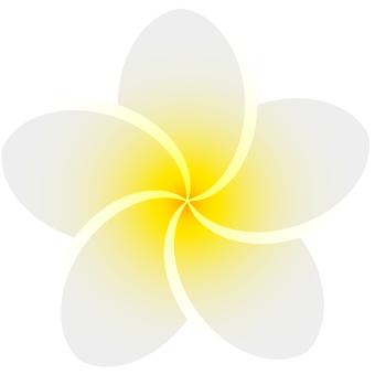 Plumeria (white)