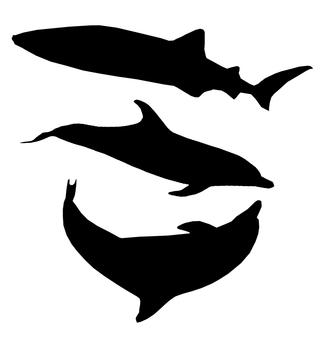 돌고래와 상어