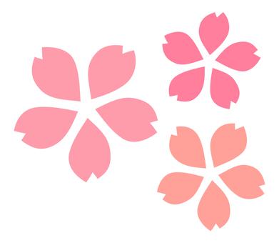 Sakura / flower