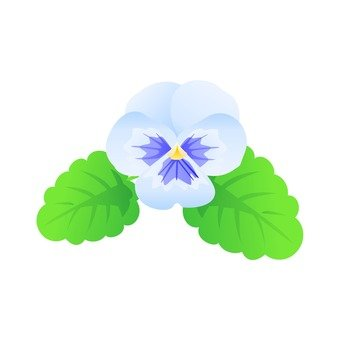 Light blue pansy
