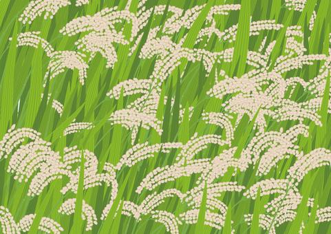 Rice image 4