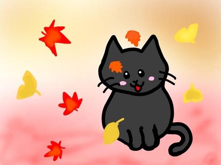 단풍과 고양이