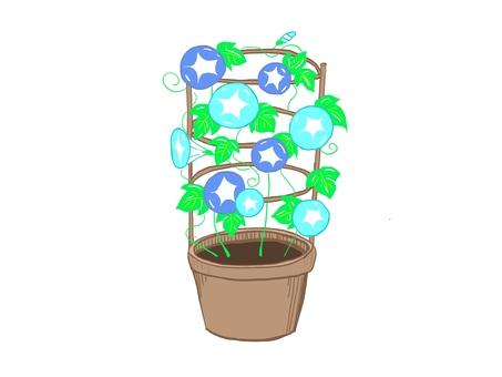 나팔꽃 블루 화분