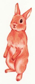 Rabbit chako (standing)