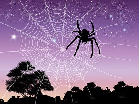 Spider web 03