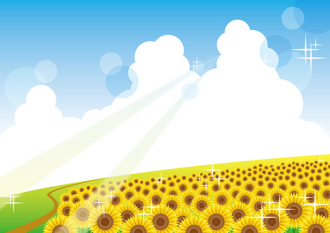 Sunflower _ Background 07