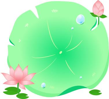 Lotus leaf board / Lotus flower