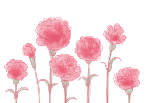 Carnation watercolor
