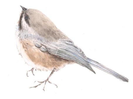 Birds 1 - a bit of a blue bird
