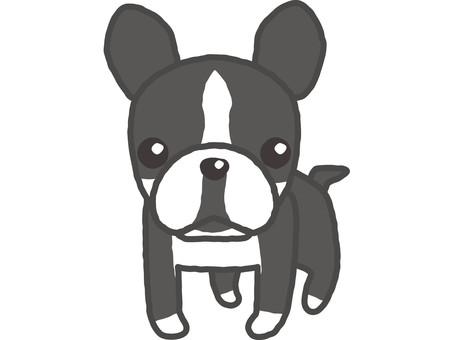 French bulldog 3