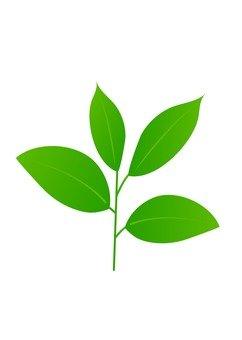 Leaf 23
