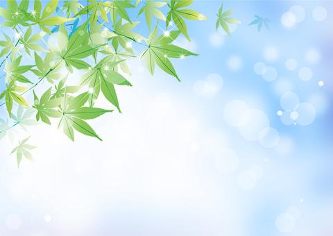 Maple _ sky background
