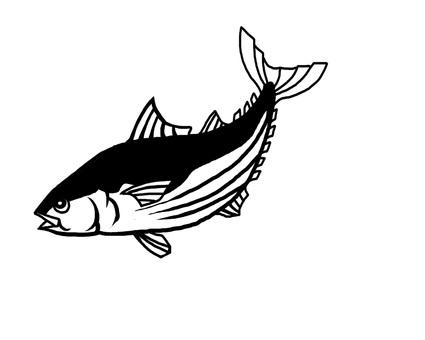 Bon魚黑色和白色