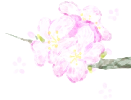 【벚꽃】 【봄】