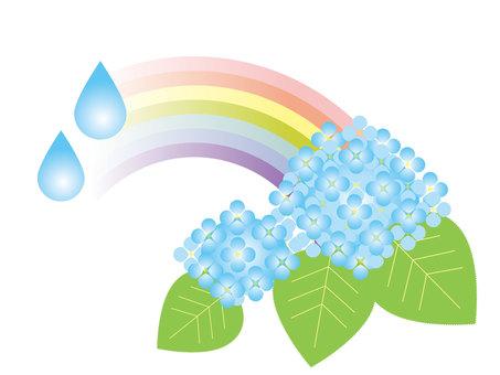 繡球花雨季
