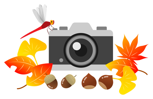 Camera and dragonfly and autumn leaves etc.