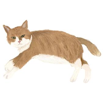 Brown white cat