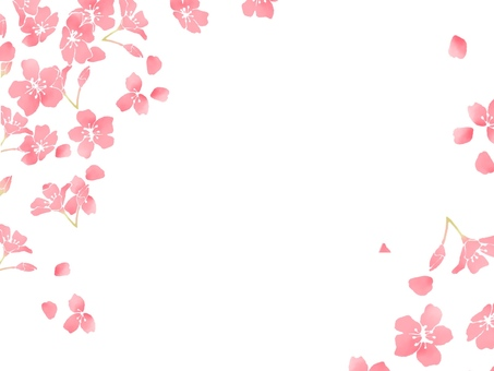Cherry blossoms (wallpaper)