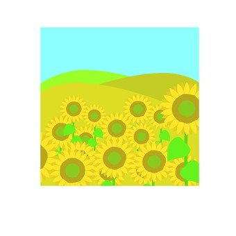 Andalusian sunflower field