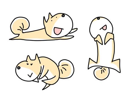Shiba Inu lying down