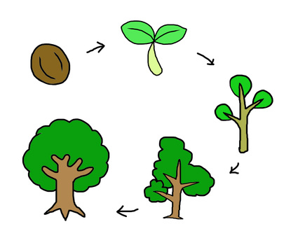 Growth of trees