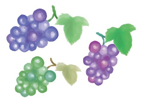 Grape three color fruit