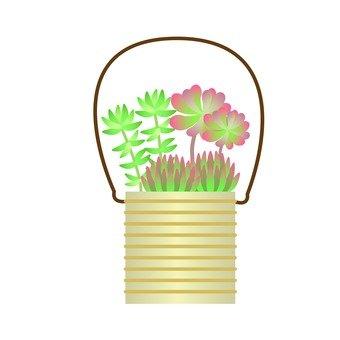 관엽 식물 - 다육 식물의 다양한 설치 (캔)