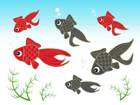 Goldfish set swimming