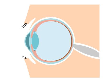 Illustration of the eye