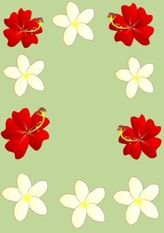 Hibiscus and plumeria (green)