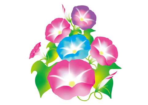 나팔꽃 NO.2 3 색