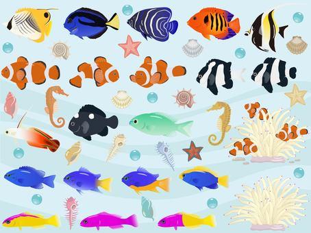 Saltwater fish set