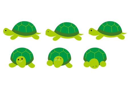 거북이 녹색