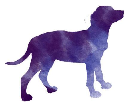 Dog illustration watercolor